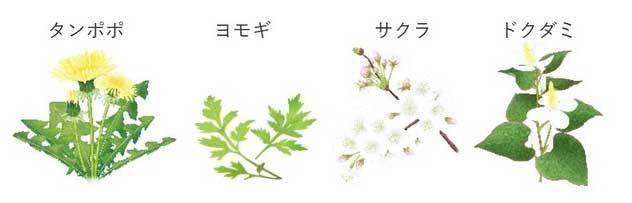 タンポポ・サクラ・ヨモギ・ドクダミ